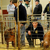 An FFA member watches the swine judge as he prepares to enter the show ring with his Durock barrow during the 80th annual Northwest District Junior Livestock Show at the Chisholm Trail Expo Center Saturday, March 8, 2014. (Staff Photo by BONNIE VCULEK)
