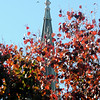 A bird takes flight as the steeple at St. Francis Xavier Catholic Church towers above colorful trees Tuesday, Nov. 12, 2013. (Staff Photo by BONNIE VCULEK)