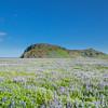 Lavender field