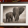 z_0543--207 Elephant with Flaring Ears, Amboseli by Nick Brandt