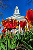 Tulips frame First Baptist Church on Church Circle. Photo by David Grace