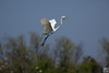 take off, egret
