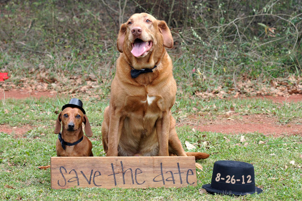 e save the date dogs copy