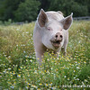 20130804_Farm_Sanctuary_Hoe_Down_6017