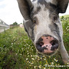 20130804_Farm_Sanctuary_Hoe_Down_8354