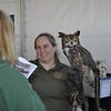 <b>Palm Beach Zoo's Great Horned Owl</b> Everglades Day, February 14, 2015 <i>- Anthony Lang</i>