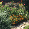 This is Diane Duquette's garden by her front walkway. You'll find marigolds, zinnias, knockout roses and cannas. At the bottom left is winter jasmine. Photo By Diane Duquette