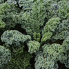 Master gardener Columbus Brown of Corpus Christi Church sent over this photo of kale from the Stone Mountain Community Garden. Photo By Columbus Brown