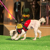 haute-dog-sf-2014-384