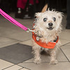 haute-dog-sf-2014-066