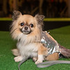 haute-dog-sf-2014-397