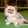 haute-dog-sf-2014-396