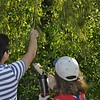 <b>Gathering Seed Pods</b> <b>Marshall Foundation Cypress Harvest</b>  October 25, 2014 <i>- Anthony Lang</i>
