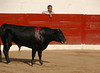 Puerto Vallarta Bullfight