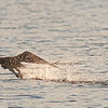 Salt Pt. fledgling fishing practice by ccb5 August 21, 2014