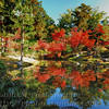Tohjiin Temple in Fall #1 等持院の紅葉 1