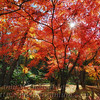 Tohjiin Temple in Fall #4 等持院の紅葉 4