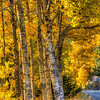 golden-forest-road-2