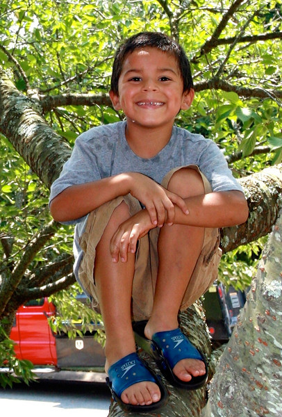Alberto (then age 6) in the same tree. These are good climbing trees!