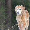Our sweet golden retriever Blizzard passed away today at age 13.5. We will miss her endlessly, and we will always remember her huge smile, her mad love for tennis balls, her profound gentleness, and the biggest heart we've ever had the privilege to know. Rest in peace, Blizzie.