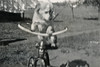 121. Bicky the dog on trike. He was pedal challenged. (c. 1948)