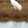 Whooping Cranes flying off to protect their territory.