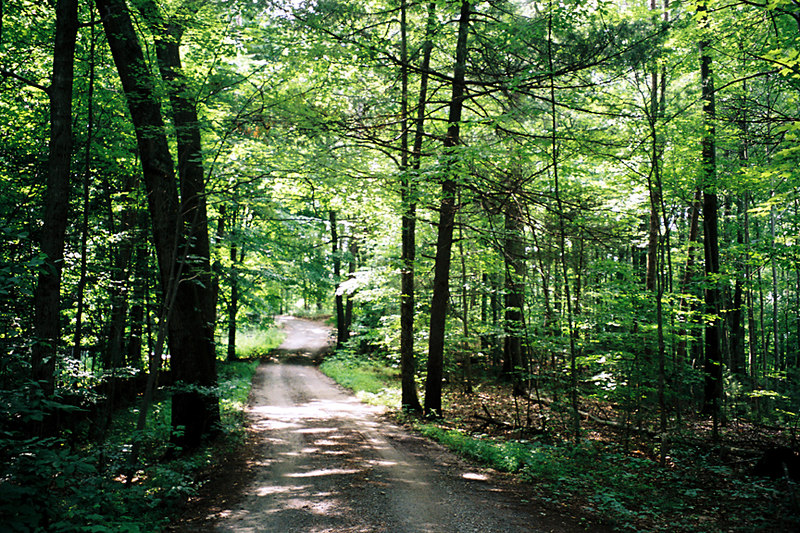 [Photo by Betty] Classic summer photo of the private road that passes along the main ridge of Twin Oaks.