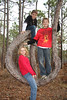 up a tree, Noelle, Fox, Chip