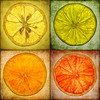 Citrus Gigas  An art panel installation created by printing out each fruit slice onto watercolour paper and mounting them onto sixteen 12x12 wood panels.