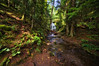 Cascade Creek: Cutting a Rainforest Path Through Moran State Park