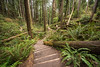 CALIFORNIA 2651<br /> <br /> Arcata Community Forest