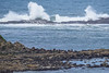 "OREGON 2820<br /> <br /> ""Seals and Surf at Shell Island and Simpson Reef""<br /> <br /> Cape Arago State Park"