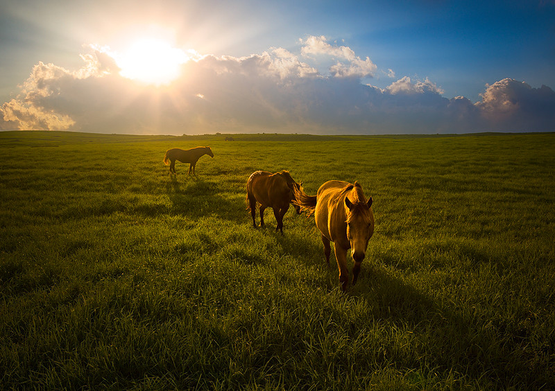"<b>""HAWAIIAN HORSE HEAVEN""</b>  The Big Island, Hawaii  Giddyup! Most people don't realize that the Big Island of Hawaii has thousands of acres of lush grasslands, but these three beautiful horses sure do. The Waimea district of the Big Island is a horse's paradise, with one of the largest ranches in the US. It's breathtaking and surreal."