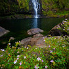 """FLOWERY KULANIAPIA FALLS""  The Big Island, Hawaii  Tiny flowers, known as False Heather, line a tropical pool fed by the largest privately owned waterfall in the state of Hawaii."