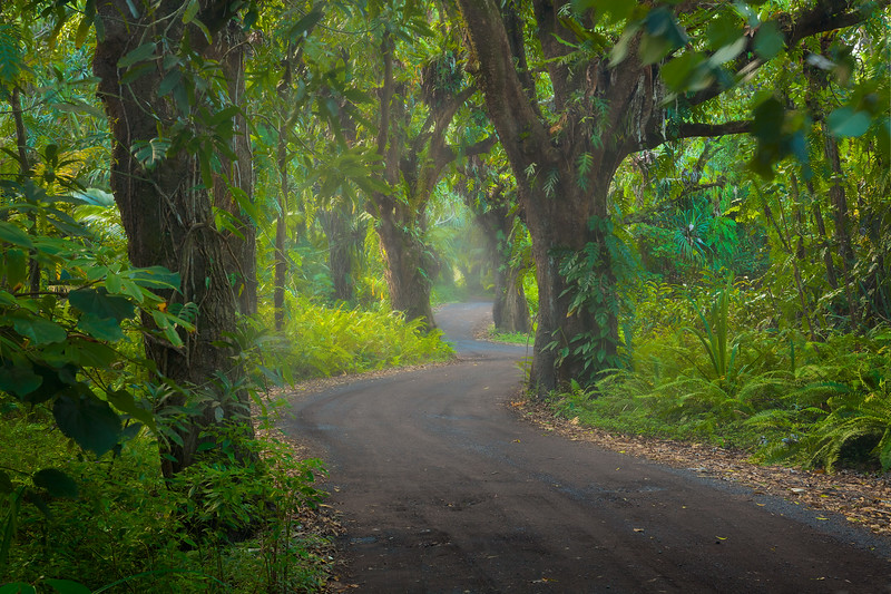 """RAMBLING RAINFOREST ROAD""  The Big Island, Hawaii  A curvy and mysterious dirt road meanders its way through a dense, foggy jungle in Hawaii's remote Puna region."