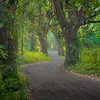 "<b>""RAMBLING RAINFOREST ROAD""</b>  The Big Island, Hawaii  A curvy and mysterious dirt road meanders its way through a dense, foggy jungle in Hawaii's remote Puna region."