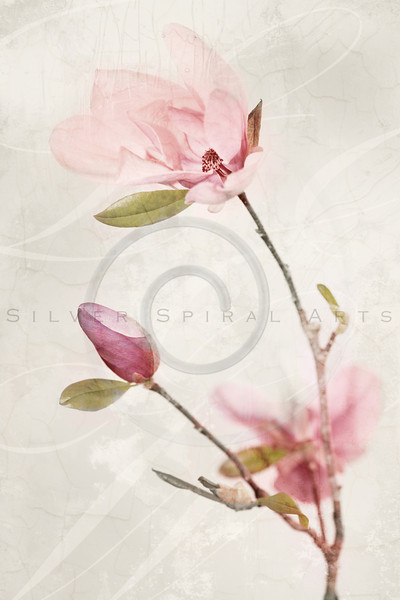Magnolia Jane Blossoms Series 3