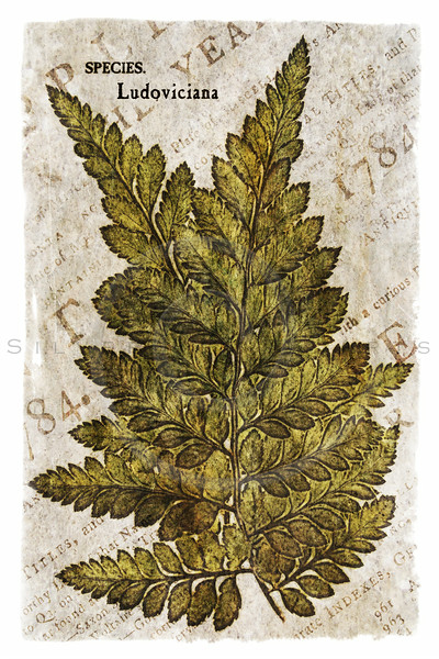 Vintage Fern Leaf Series II