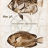 Vintage Fish - Series II