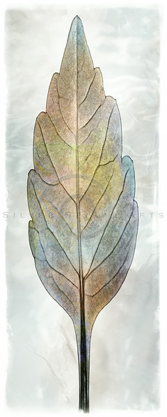 Water Gradient Leaf
