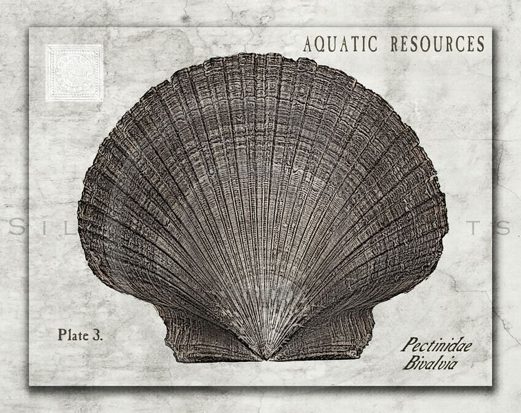 Aquatic Resources Shell Series III