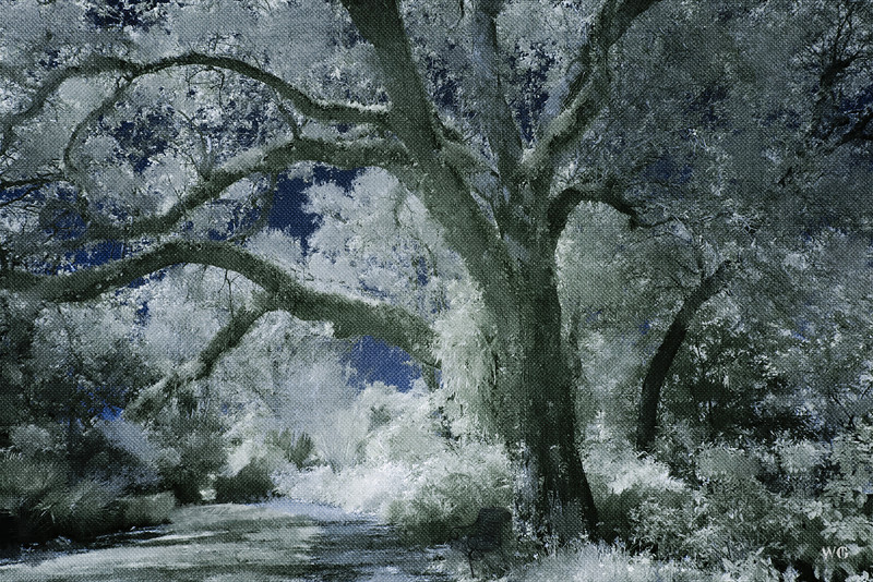 Bok Tower Gardens Infrared Painted