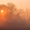 Spring Sunrise in Fog