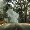 Monterey, California<br /> 17 Mile Drive<br /> Early foggy morning