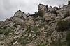Limastone rocks, habitat of Pellaea glabella ssp. occidentalis, Smooth Cliffbrake and Telesonix heucheriformis, James Saxifrage near Mammoth Hot Springs.