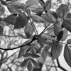 Leaves, mono abstract