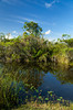 Grasslands and bogs of the Florida everglades, USA.