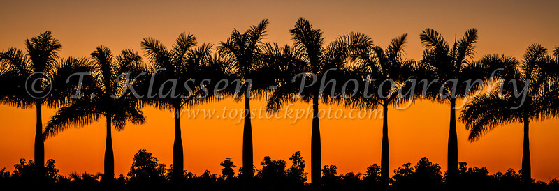 A row of palm trees silhouetted against a sunset near Florida City, Florida, USA.