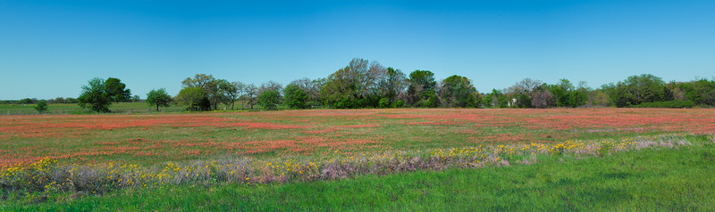 Robertson County Paintbrush Pano