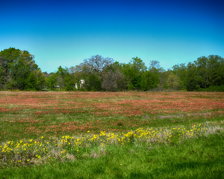 Paintbrush Pasture